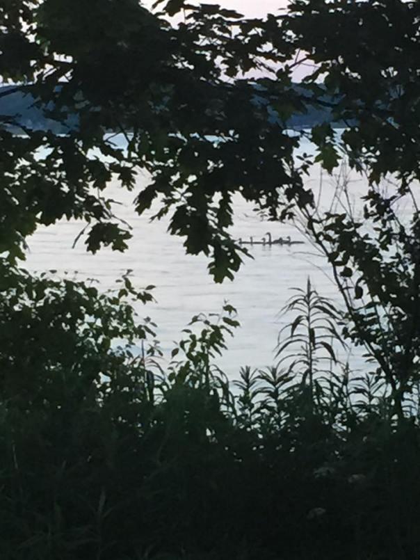 chatauqua geese
